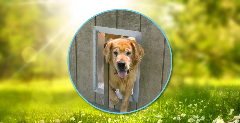 gopet-dog-vue-kennel-doors-home
