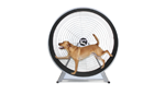 gopet-usa-dog-treadwheel_150