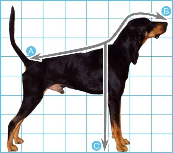 Pet's measurement